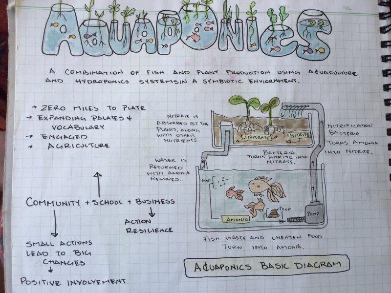 Aquaponics   BlinkNow